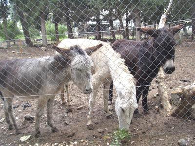 3匹ロバさん。すっかり仲良し